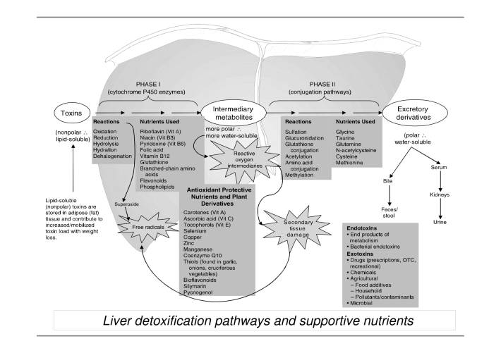 Liver Detoxification Pathways-1